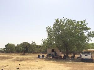 バンクマナ木の下